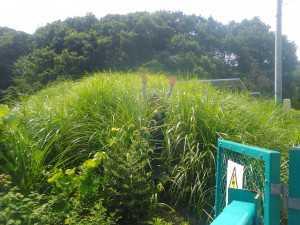 太陽光発電所の草刈&お片付け